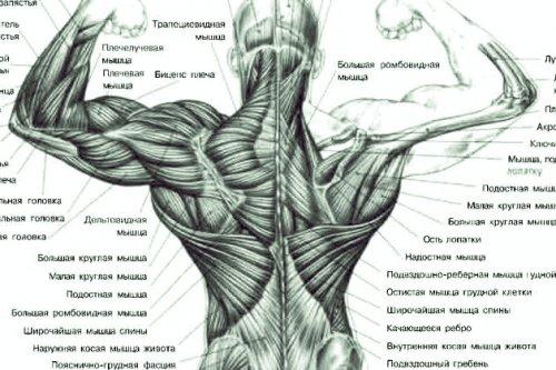 позвоночник упражнения трансформация