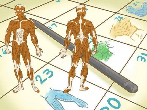 митохондрии мышц