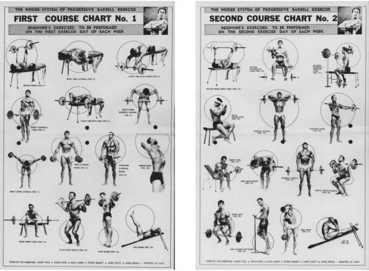 упражнения для начинающих бодибилдеров в картинках спит одежде